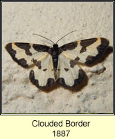 Clouded Border, Lomaspilis marginata
