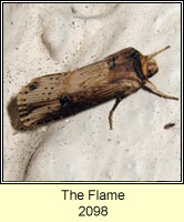 The Flame, Axylia putris